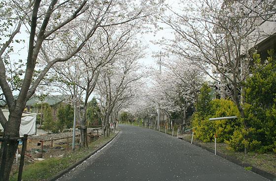 oosumi_23_sanmoji.jpg