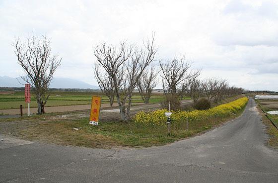 oosumi_44_o-koyama.jpg