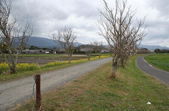 oosumi_46_o-koyama.jpg