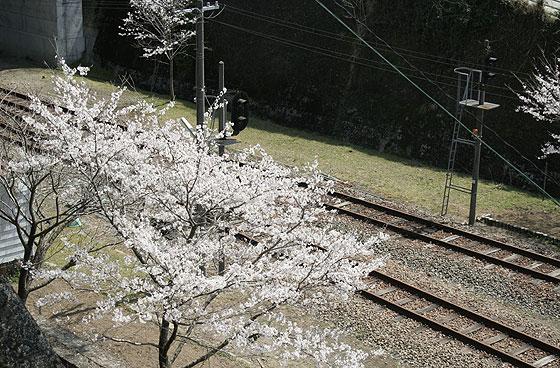 takachiho_201104_6.jpg