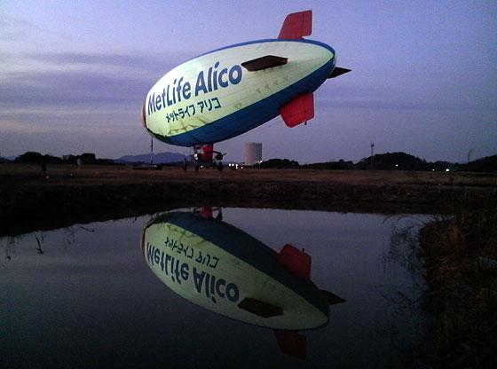 alico10.jpg