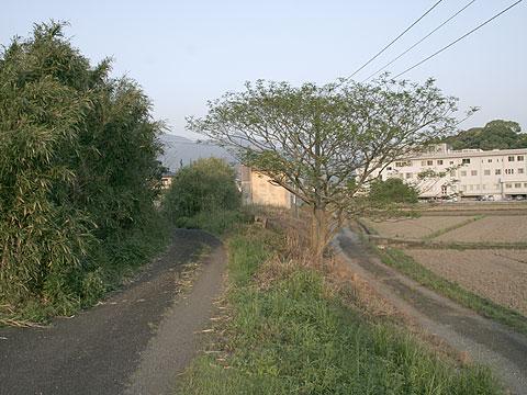 kara_051.jpg