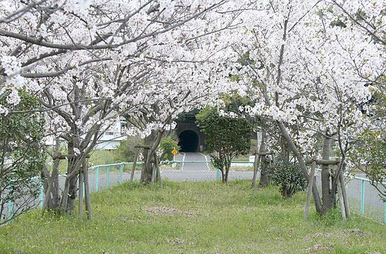 oosumi_115_shinjo.jpg